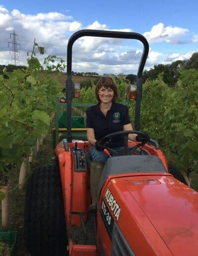 jane moore tractor in toppesfield vineyard