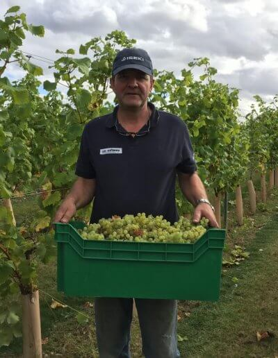 peter moore picking grapes